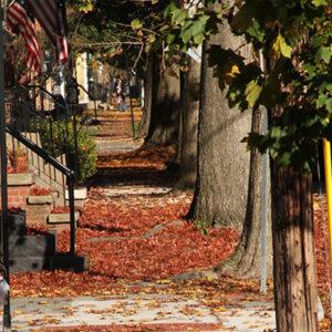 sidewalk covered in leaves